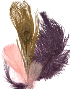 Peacock Eye - Ostrich - Hackle - Goose Coquiell Mix - AMT - CHP - GI