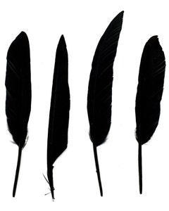 Duck Pointer Feathers - Black