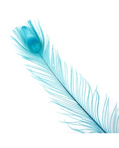 """Peacock Eyes Bleached/Dyed - Dark Aqua Feather 30-40"""" - 10 PC"""