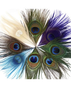 Peacock Assorted Feather Eyes - Assorted Mix