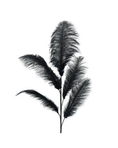 Black Feather Ostrich Stem