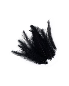 Rhea Tail Feathers Selected - Black