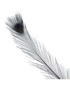 Peacock Tail Eyes Bleached/Dyed - 25-40 Inch - 10 PCS - Black