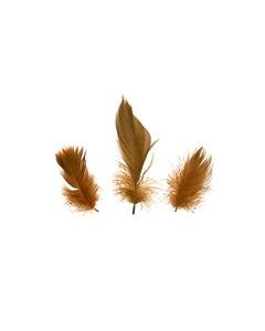 Duck Plumage Mallard Feathers - Brown