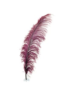 Ostrich Feathers-Spads Selected - Burgundy