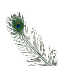 Peacock Feather Eyes Stem Dyed - 25-40 Inch - 10 PCS - Kelly
