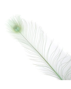 Peacock Eyes Bleached/Dyed - 25-40 Inch - 10 PCS - Celedon