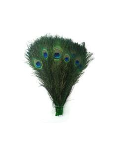 "Bulk Peacock Eye Feathers (Full Eye) Stem Dyed - 100 pc - 8-15"" -  Kelly"