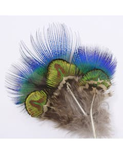 Blue and Green Gold Natural Peacock Plumage - 24 pcs