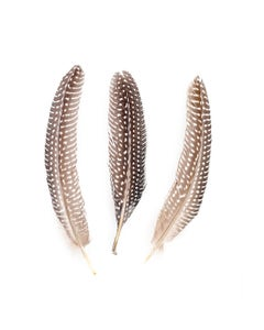 """NATURAL GUINEA HEN ROUNDS 6-8"""" - 12 PC"""
