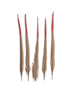 Ringneck Pheasant Tails Bleached/Dyed & Tipped Champagne/Coral