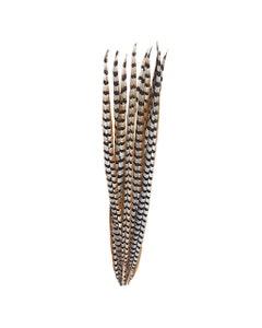 """Venery Pheasant Tails - Natural - 30 - 40"""""""