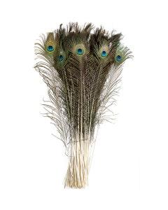 Peacock Tail Eyes Natural