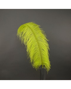 Ostrich Prime Femina Plumes - Lime