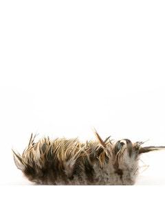 """Rooster Saddle - Badger - Natural - 4 - 6"""""""
