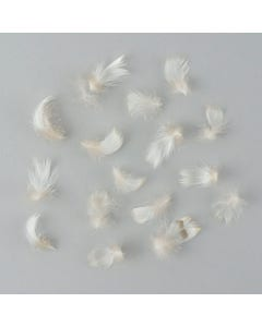 Breast Wood Duck Feathers - Natural