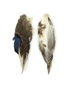 Duck Wings Natural Mallard-1