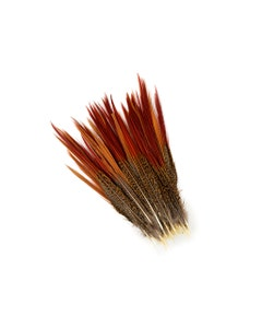 """Golden Pheasant Red Top Tail Feathers - Natural - 8 - 10"""""""