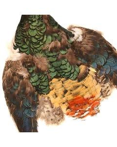 Lady Amherst Pheasant Pelt #1 - Natural-NoC