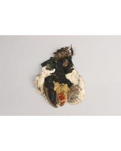 Lady Amherst Pheasant Pelt #2 - Natural-NoC