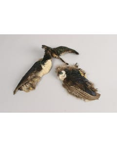 Lady Amherst Pheasant Pelt #3 - Natural