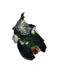 Lady Amherst Pheasant Pelt #1 - Natural-WC