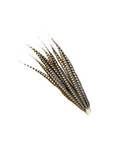 """Lady Amherst Pheasant Tails - Natural - 30 - 35"""""""