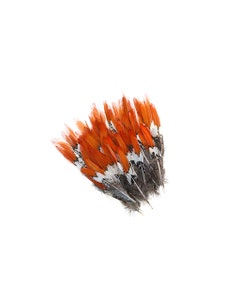 """Lady Amherst Red Top Tails - Natural-4-6"""""""