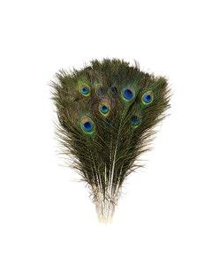 "Peacock Tail w/Small Eyes Natural - 8 -15"""