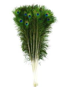 """Peacock Tail Eyes Natural - 35 - 40"""""""