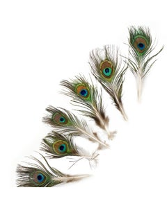 Peacock Feather w/Small Complete Eyes Natural