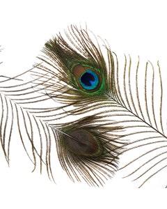 """Peacock Feather Eyes Natural - 8-15""""- 2pcs"""