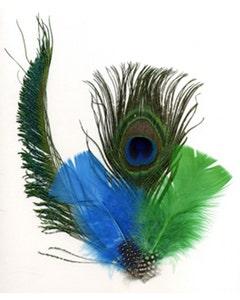 Peacock Eye-Sword-Guinea-Hackle - DKT/K/N