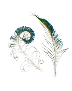 Peacock Feather Swords - Natural