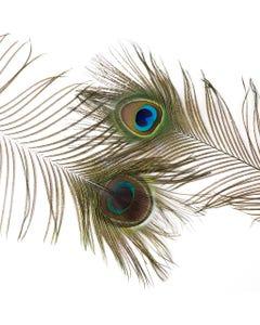 Peacock Feather Eyes Natural - Natural