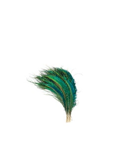 """Peacock Feather Swords Left Wing 12-20"""" - Natural"""