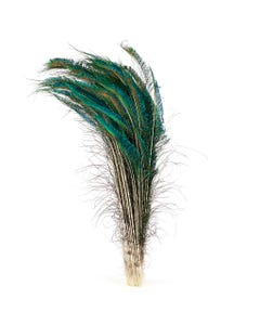 """Peacock Feather Swords Natural - LT - 25 - 30"""""""