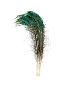 """Peacock Feather Swords  Right Wing 30-40"""" -  Natural"""