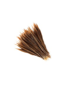 "Golden Pheasant Tails Natural - 10 -12"""