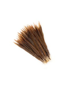 "Golden Pheasant Tails Natural - 12 - 14"""