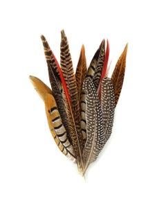 Assorted Natural Pheasant Tails Natural