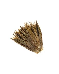 """Ringneck Pheasant Tails - Natural - 10 - 12"""""""