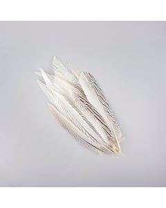 Silver Pheasant Tail Feathers - Natural