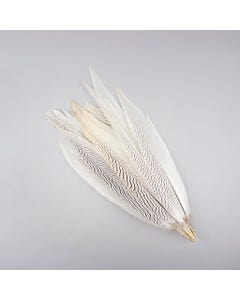 """Silver Pheasant Tail Feathers - Natural - 16 - 20"""""""