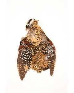 Venery Pheasant Pelts #2 - Natural