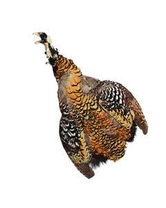 Venery Pheasant Pelts #1 - Natural