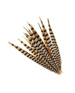 """Venery Pheasant Tails - Natural - 16 - 20"""""""