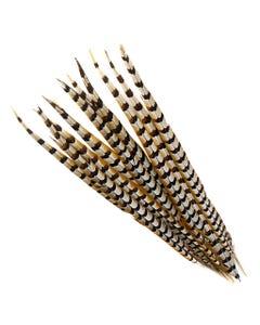 """Venery Pheasant Tails - Natural - 20 - 30"""""""
