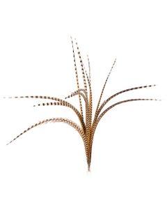 Venery Pheasant Tails Natural