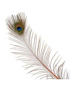 Peacock Feather Eyes Stem Dyed - 25-40 Inch - 10 PCS - Orange